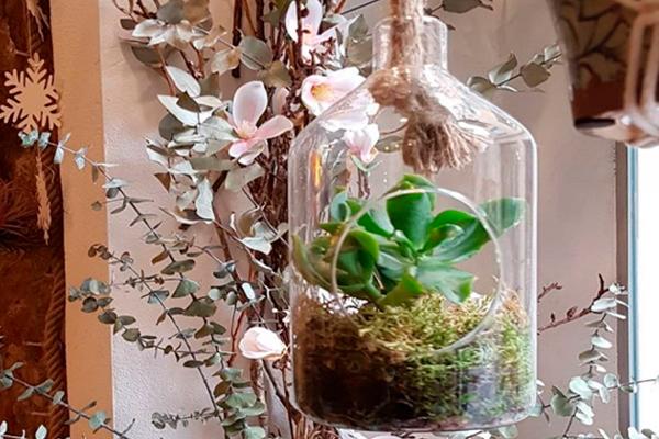 Plantas Macetas Zelinda Milano